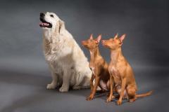 kolm_koera