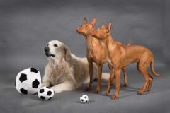 kolm_koera1